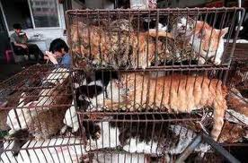 Animals who are suffering at the fur farms in China