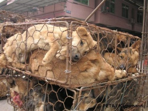 fur farm animals in china